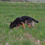 Landesgruppen Fährtenhundprüfung / LG08 Hessen-Süd